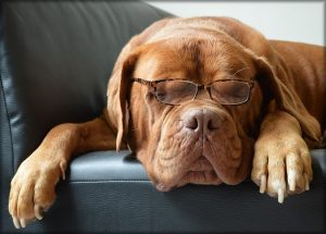 dog glasses office website content perth